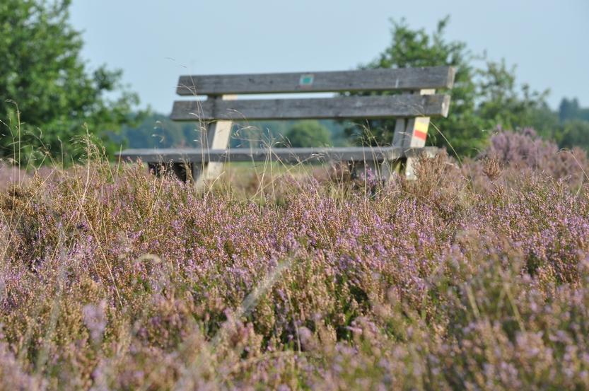 3- tot 8 daagse Wandelarrangementen Drenthe - Omgeving Exloo