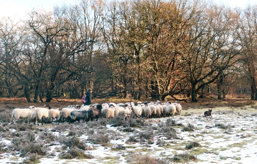 Winter Wandelarrangement Drenthe